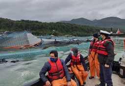 Chaitén: Camanchaca recupera 25,8% de peces escapados y cuantifica pérdidas