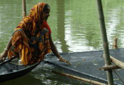 Aquaculture has improved food security, says UN