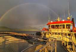 Destacan exitosos resultados de Optilice en Chile