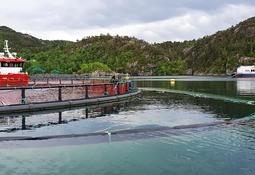 Luseskjørt er nytt for Flokenes Fiskefarm og gjev gode resultat