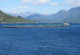 Confirman sospecha de virus ISA en Noruega