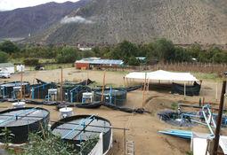 El proyecto que logró cultivar truchas en pleno Valle del Elqui