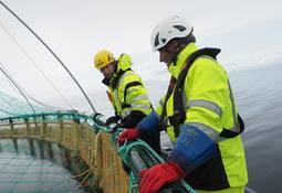 Vidar Aamo Nikolaisen blir ny regiondirektør i Grieg Seafood Finnmark
