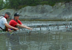 Four out of five back aquaculture in Canadian poll