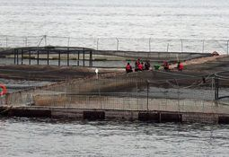 Autoridad obligará a que cada centro de salmón instale Estaciones de Calidad