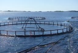 Nye erfaringer og kunnskap fra forskning på strøm i havbruksanlegg