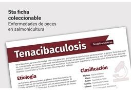Nueva ficha técnica sobre tenacibaculosis