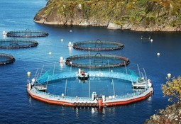 Cermaq to trial closed containment in BC waters