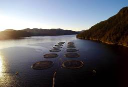 Mowi completes ASC certification for all BC farms