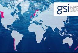 Mowi leaves Global Salmon Initiative