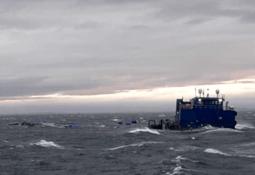 Sunken salmon cages found 1,000 feet deep