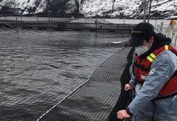 Magallanes: Sernapesca establece zona de vigilancia de ISA en Seno Skyring