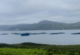 Salmon farm workers in bid to save tragic scallop diver
