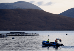 Scientists identify new tool for testing fish farm impacts