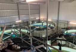 Atlantic Sapphire måtte nødslakte 200 000 fisk
