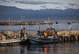 Sernapesca descarta daño ambiental en escape de Salmones Camanchaca