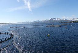 Fuerte aumento de casos ISA en Noruega se debería a cambios en el virus