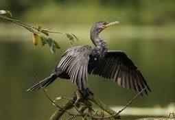 Investigan muerte de 160 aves en Quellón por posible intoxicación