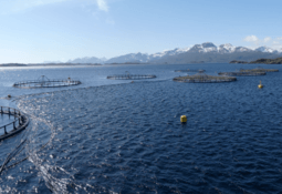 Is virus mutation to blame for Norway ISA increase?
