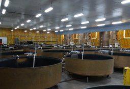 AquaBounty venderá acciones tras registrar pérdida por US$6,6 millones