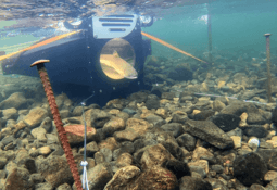 Caught on camera: how AI will stop escaped salmon going upriver