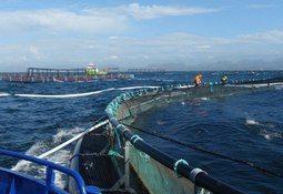 Noruega: buscan determinar regulaciones específicas para la acuicultura offshore