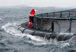 Nytt regelverk for eksponert havbruk vil kreve tid