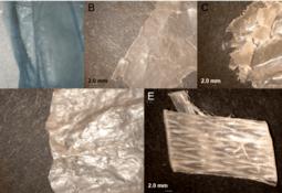 Study: Marine plastics could carry aquaculture pathogens