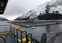 Proyecto Nova Austral-Salmones Austral renueva planes tras duro impacto ISA