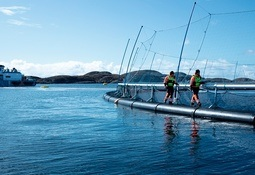 Signify y ScaleAQ se asocian para optimizar iluminación en acuicultura