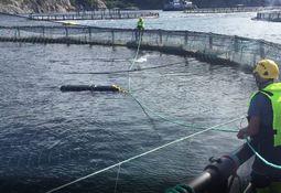 Leppefiskskjul: SeaNest med storsalg til Nova Sea