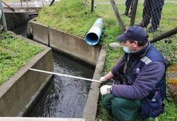Cermaq toma medidas tras denuncia por contaminación en Río Pescado