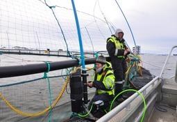 Ecotone tester ut luseteller i sjø – komplett system skal være klart i løpet av neste år