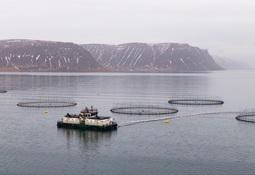 Øker størrelsen på emisjonen i Icelandic Salmon