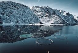 Grieg Seafood tar miljøgrep med norskutviklet PVC-løsning