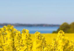 Nuseed es finalista en importante premio a la innovación con Aquaterra