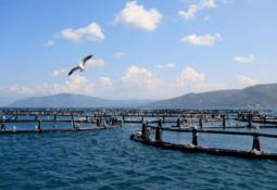 Proyecto de salmonicultura oceánica en Chile revela primeros indicadores productivos