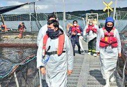 Sernapesca verifica presencia de virus ISA en centro de Marine Farm