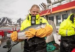 Islandsk Benchmark-rogn ga storfisk produsert på svært kort tid