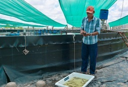 Shrimp production packed into an app