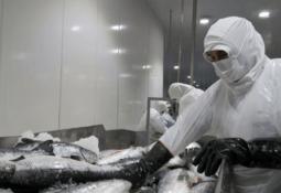 Mowi Chile proyecta alza de 8% en su producción 2021