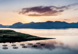 Salmon farmers Zoom in on Scottish growth potential