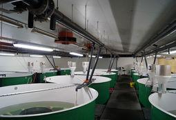 Akvafarm øker veksten på tross av flere utfordringer