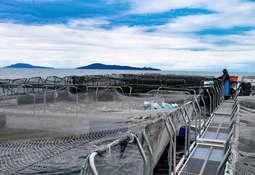 Harán ronda de negocios entre proveedores acuícolas chilenos y empresarios peruanos