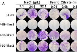 Biofilm de Piscirickettsia modula virulencia y respuesta inmune en macrófagos