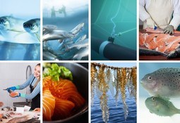 FHF når ut til mange flere i havbruksnæringen på digitale flater