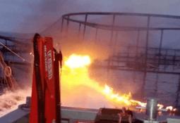 Incendio de jaula en Tasmania provoca fuga de 50 mil salmones