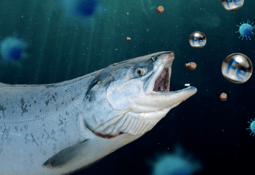 Dieta, alimentación y nutrición para combatir infecciones en peces