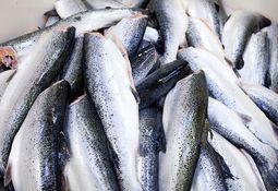 Anuncian construcción de RAS en Bélgica para 15 mil toneladas de salmón