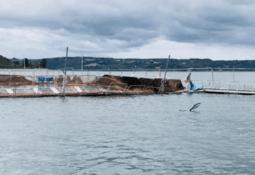 Salmonicultores consideran excesivo sancionar escapes con valor de cosecha